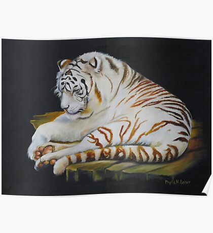 White Tiger Sleeping Poster