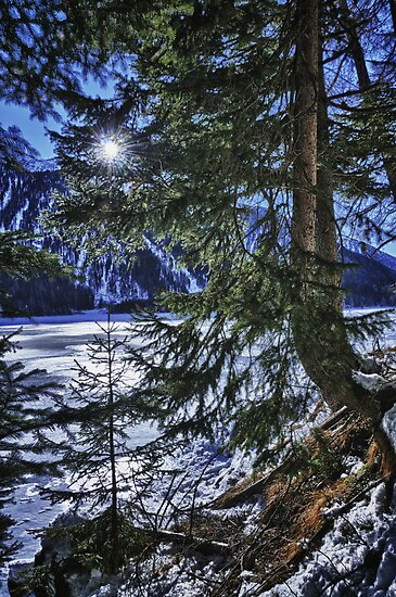 Wall art winter scene snow in the forests and frozen lake of the Alps - color photo - I colori dell'inverno by visionitaliane