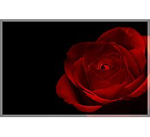 Low Key Rose Photographic Print