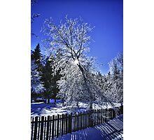 Tree covered in frost winter scene wall art fine art color - Pizzo di Ghiaccio Photographic Print