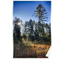Swampy area in fall forest and trees against sunset morning landscape color wall art - Dietro gli alberi Poster