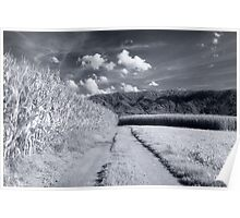 Corn fields and mountains Alpine rural landscape on black and white infrared film fine art wall art - I campi di casa Poster