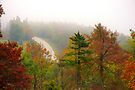 Foggy Morning Road,  Arkansas Ozarks by NatureGreeting Cards ©ccwri