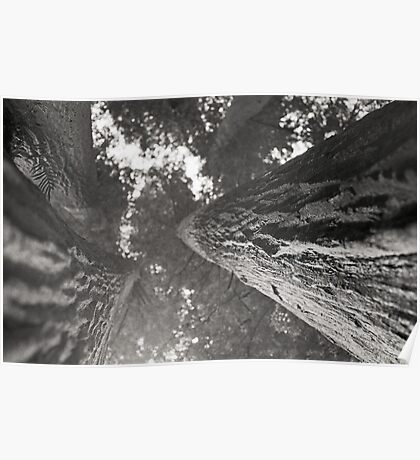 Redwood sequoia bark perspective - giant tree - black and white film - I giganti gemelli Poster