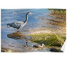 Naturalistic photo heron and ducks swamp birds color wall art - Nella Palude Poster