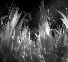 Corn leaves and plants on infrared film rural black and white fine art photography - Verso Casa by visionitaliane