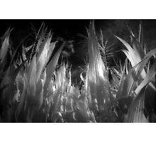 Corn leaves and plants on infrared film rural black and white fine art photography - Verso Casa Photographic Print
