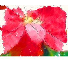 Mottled Red Poinsettia 2 Serene Photographic Print