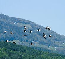 Naturalistic wall art color storks flock in flight - Liberi by visionitaliane