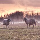 Sheep in Mist by Nigel Bangert
