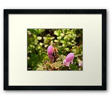 Bee gathering Framed Print