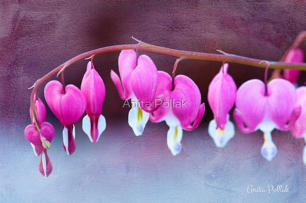 A Bevy of Bleeding Hearts  by Anita Pollak