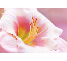 Summer's Gentle Beauty Photographic Print
