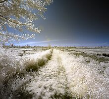Rural landscape infrared photography wall art - Nei campi dall'altra parte by visionitaliane