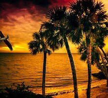 New Year in Florida by LudaNayvelt