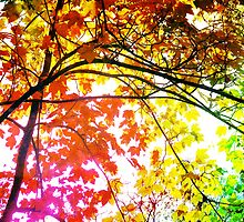 Enchanting Forest... by Denis Marsili - DDTK