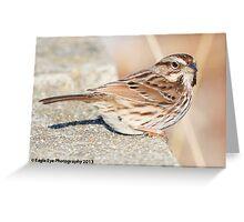 Song Sparrow - North Hampton, NH 12-24-13 Greeting Card