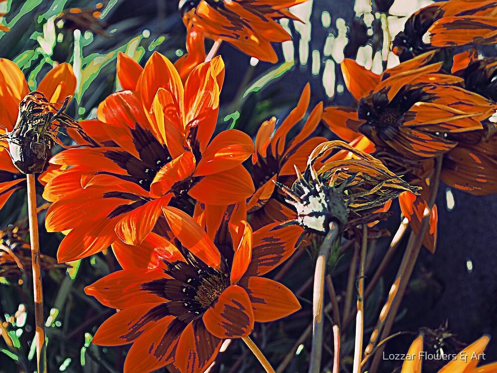 Summer Gazinia by Lozzar Flowers & Art