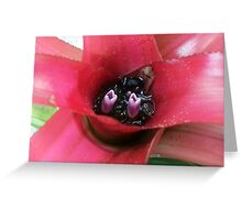 Jen's Garden - Purple and Red Bromeliad Greeting Card