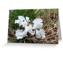 Jen's Garden - White Flower Greeting Card