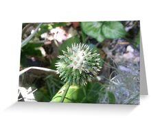 Jen's Garden - Green and White Spiky Ball Flower Greeting Card