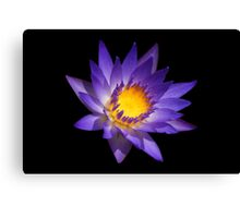 Water Lily Neon Colors Canvas Print