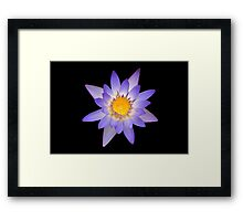 Water Lily Pastel Colors Framed Print