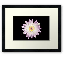 Water Lily Pink Color Framed Print