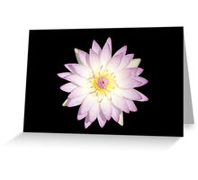 Water Lily Pink Color Greeting Card