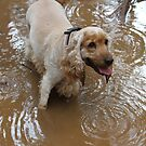 WooHoo! A Mud Puddle by aussiebushstick