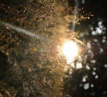 Sunrise by Ariuna Luben
