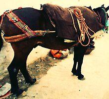Moroccan Donkey by JasmineTyler