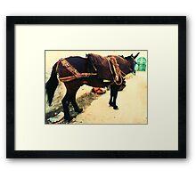 Moroccan Donkey Framed Print