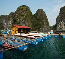 Houses on Halong Bay by vishwadeep  anshu