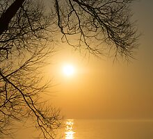 Framing the Golden Sun by Georgia Mizuleva