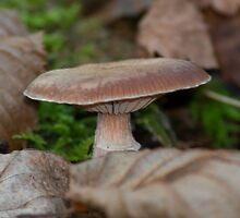 Hidden Mushroom by Ondřej Smolka