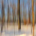 winter dream.. by JOSEPHMAZZUCCO
