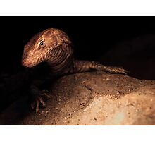 Little dragon Photographic Print