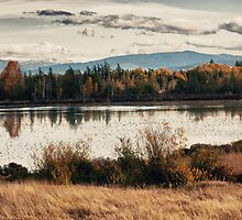 Fall in the swamp panoramic wall art artistic - Il calore dell'Autunno by visionitaliane