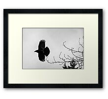 Crow in flight naturalistic animal black and white wall art - Sono soltanto il Corvo Framed Print