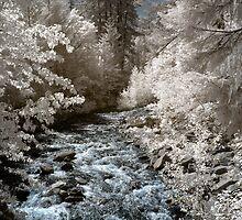 Creek off Cle Elum river infrared naturalistic landscape fine art photography - Mondo incantato - 2 by visionitaliane