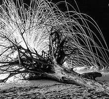 Backlit by Michael Damanski