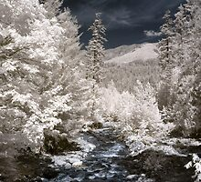 Creek off Cle Elum river infrared naturalistic landscape fine art photography - Mondo incantato by visionitaliane