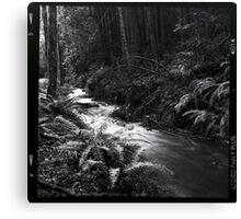 Black and white medium format creek in the forest wall art - Bianco e Nero d'un tempo Canvas Print