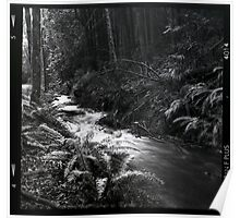 Black and white medium format creek in the forest wall art - Bianco e Nero d'un tempo Poster