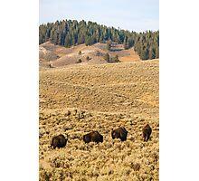 Wildlife wall art buffalo bison thunderbeast Yellowstone park landscape - In viaggio - Traveling Photographic Print