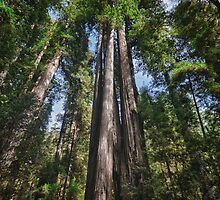 Great Redwood trees in forest naturalistic landscape wall art color - I Giganti by visionitaliane