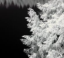 Tree and trees reflected in a lake geometrical black and white infrared - Geometrie naturali by visionitaliane