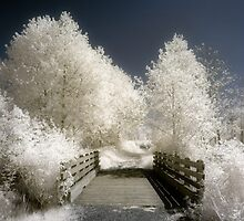 Infrared landscape photography bridge and trees - A passeggio fra le fate by visionitaliane