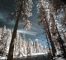 River and forest in infrared nature landscape tall trees wide angle wall art - Mondo incantato by visionitaliane